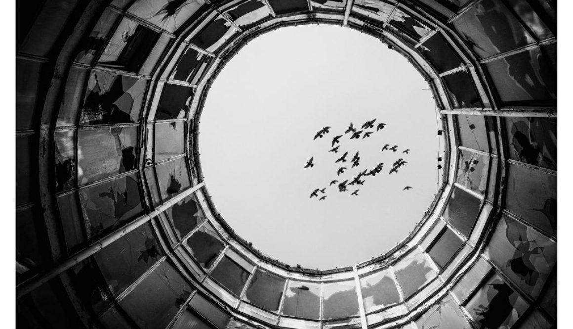 tomasz modrzejewski interfoto ptaki w okręgu czarno białe zdjęcie