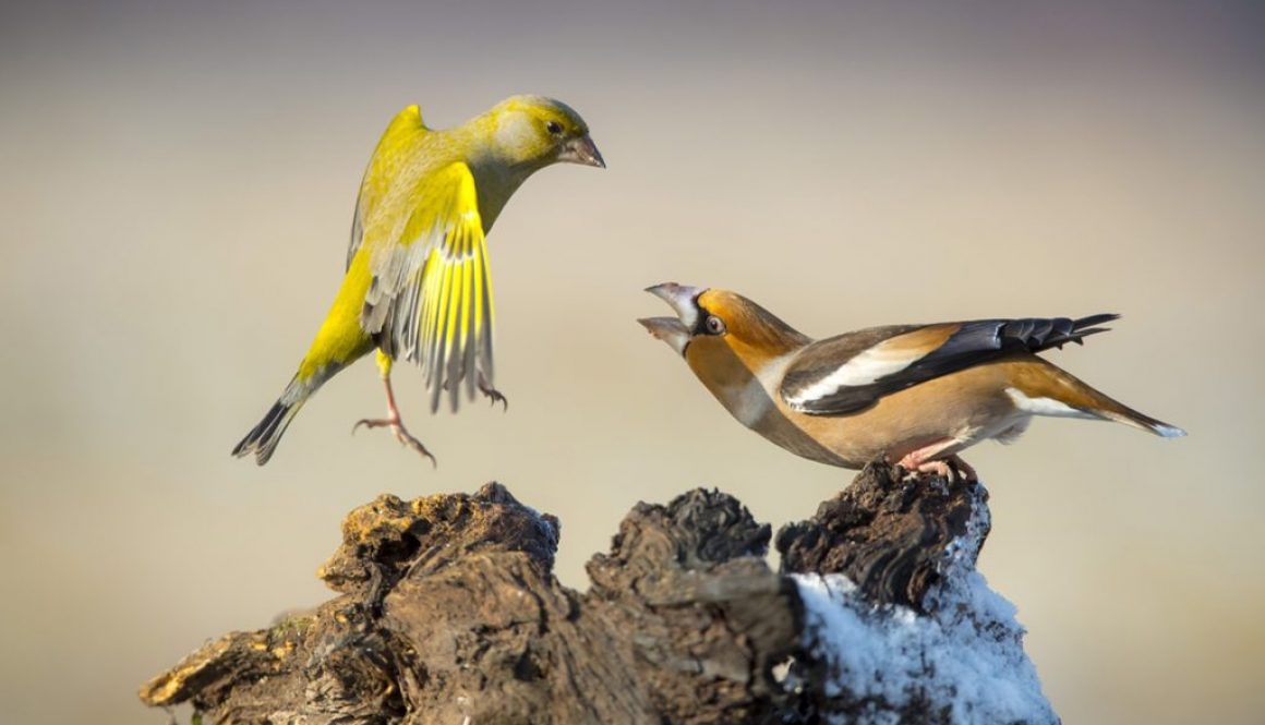 bogdan kasperczyk, ptaki, interfoto.eu
