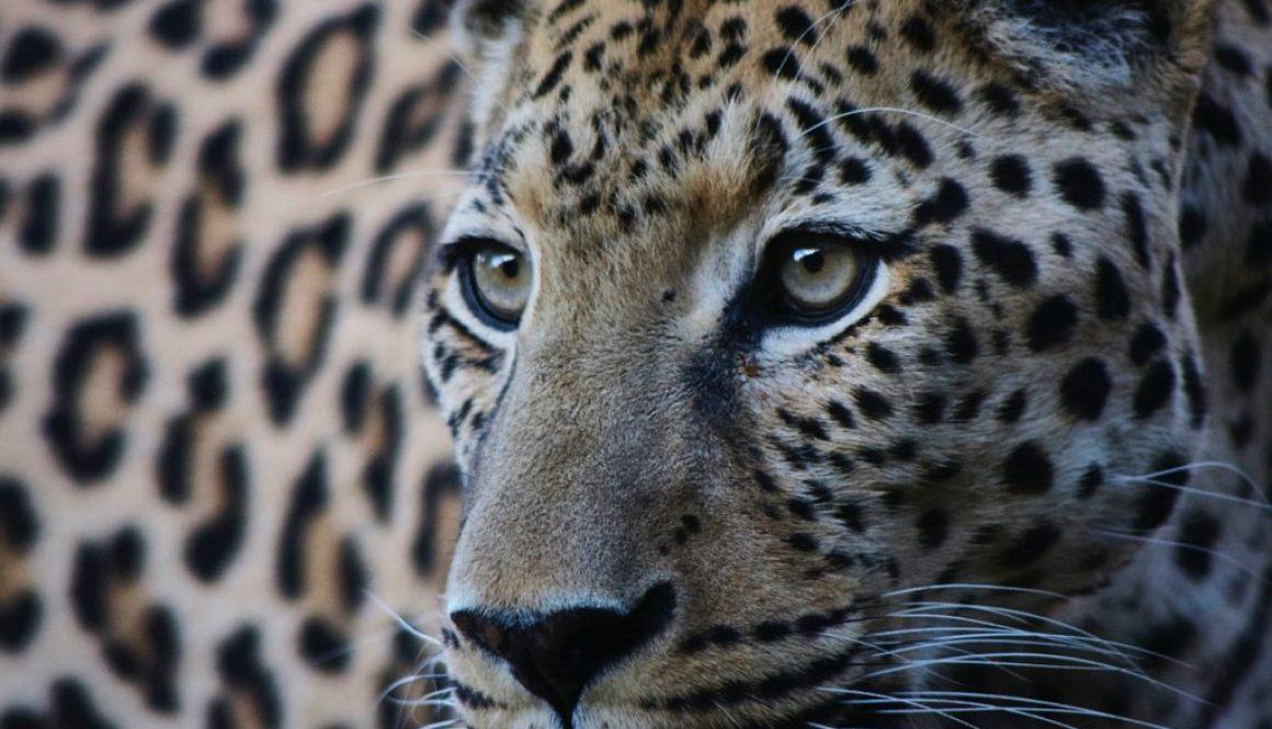 make a change, afryka, interfoto.eu, warszawa, Namibia