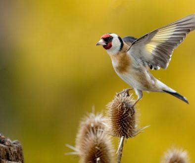 maks dobroczynski, interfoto.eu, fotografia ptaków