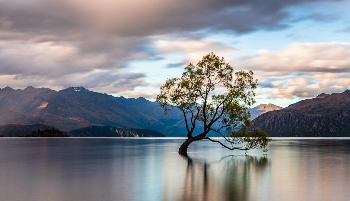 The-Wanaka-Tree