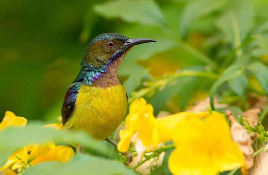 Fotografowanie ptaków wTajlandii